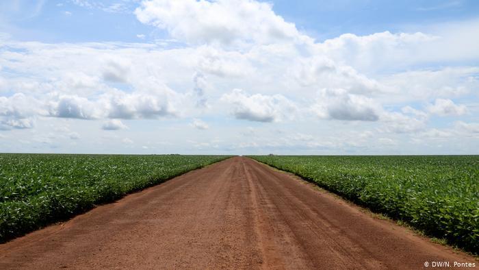 Na nova rota da soja, grão sai de Mato Grosso, maior produtor nacional, e corta a Floresta Amazônica pela BR-163
