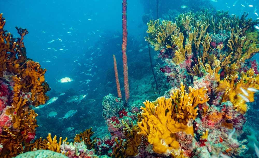 Ambientalistas querem que área do Parque de Abrolhos seja ampliada