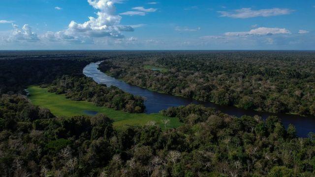 Só em 2020, a floresta amazônica brasileira perdeu 8.426 km2 por causa do desmatamento. O número preocupa especialistas, que questionam a política ambiental de Bolsonaro