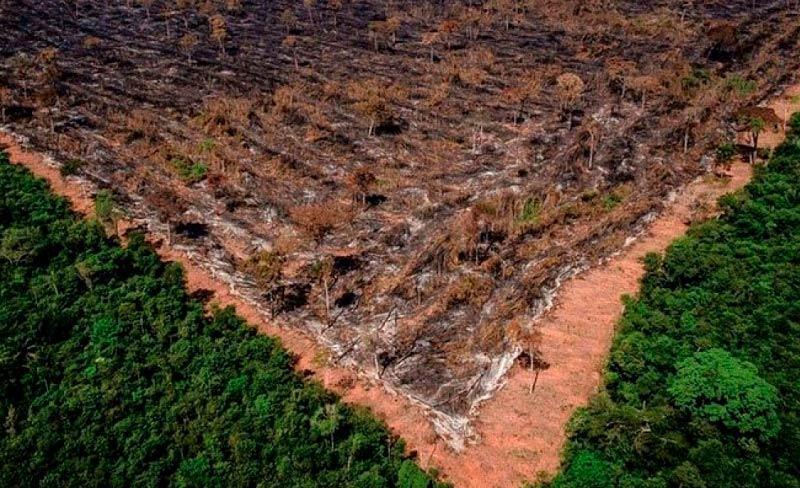 Carta pede que governo adote ações concretas e verificáveis para a preservação da Amazônia