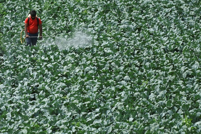 Em todo o mundo, há um 'alto risco' de contaminação devido aos resíduos de pesticidas, que podem alcançar os lençóis freáticos