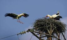 (2006) Aves fazem ninho no topo de poste elétrico, no sudoeste da Espanha (Samuel Aranda/AFP)