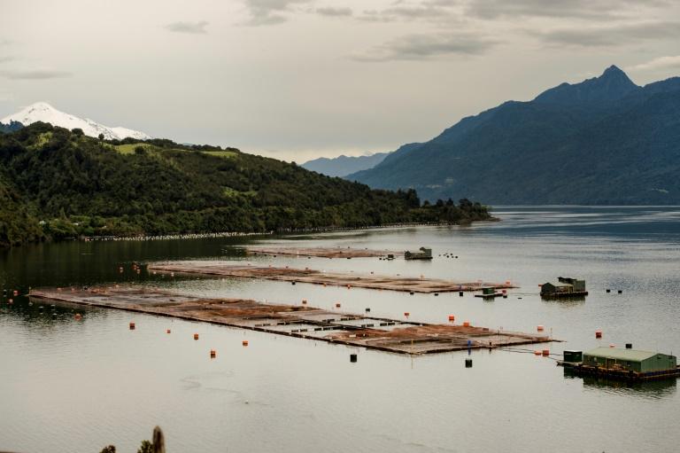 (Arquivo) Fazenda de criação de salmão no sul do Chile