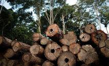 Política ambiental sofre baque na gestão Bolsonaro (Greenpeace)