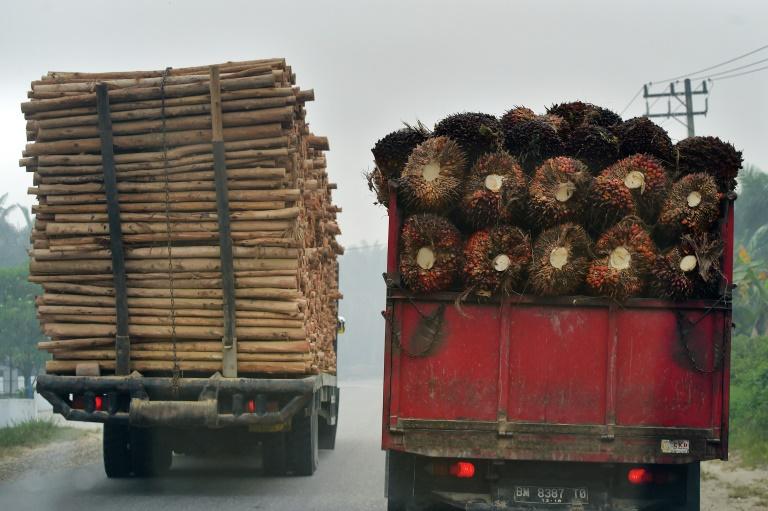 (Arquivo) O comércio internacional de produtos agrícolas levou à eliminação de 1,3 milhão de hectares de floresta tropical em 2017
