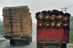 (Arquivo) O comércio internacional de produtos agrícolas levou à eliminação de 1,3 milhão de hectares de floresta tropical em 2017 (Adek BERRY/AFP)
