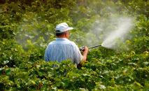 No Brasil, são registradas, em média, cerca de 15 intoxicações agudas diárias por agrotóxicos (Getty Images/AFP)