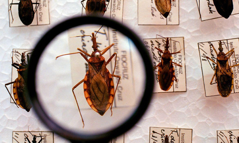 A transmissão congênita da doença é considerada uma das principais vias de infecção