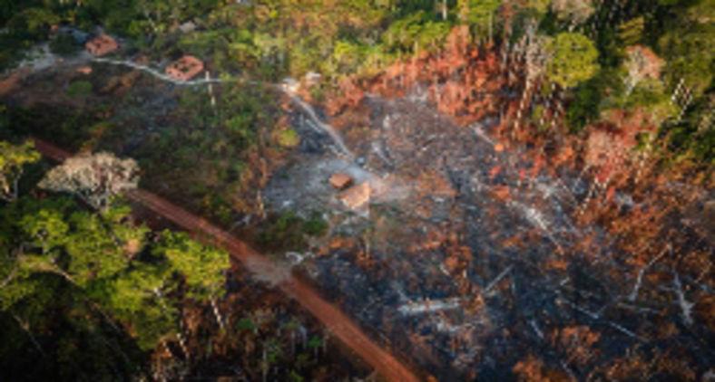 No Pará, a Terra Indígena Alto Rio Guamá sofreu com incêndios florestais e viu o desmatamento crescer em meio à pandemia (Cícero Pedrosa Neto/Amazônia Real)