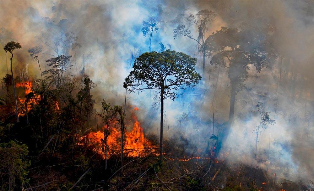 Interesse nos créditos ambientais não encontra sustentação na política ambiental do governo Bolsonaro