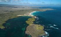 Iguanas marinhas descansam ao sol na ilha de Santa Cruz, no arquipélago de Galápagos, em 14 de abril de 2021 (Rodrigo Buendia/AFP)