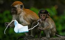 Dos macacos aos caranguejos, passando pelas gaivotas e pinguins, animais correm perigo com as máscaras descartáveis (AFP)