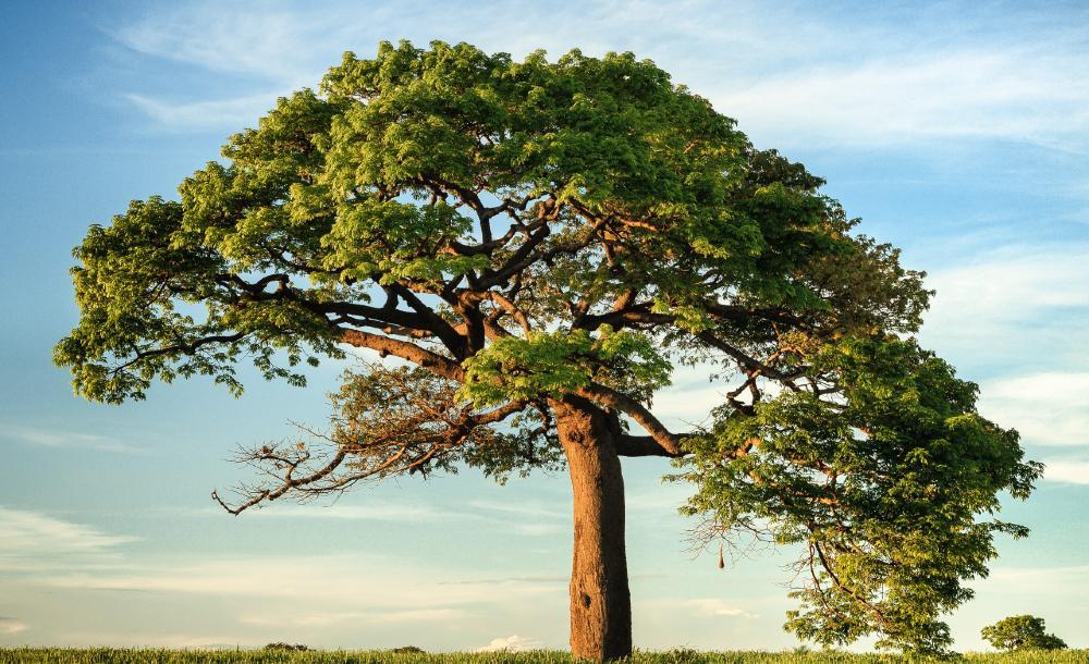 Como na experiência que relatamos, entre mãe e filhos, tronco e ramos, Jesus nos mostra que a vida é esse nó de relações, de estar juntos