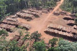 PF diz que carga tem origem de áreas de preservação (Divulgação Exército)