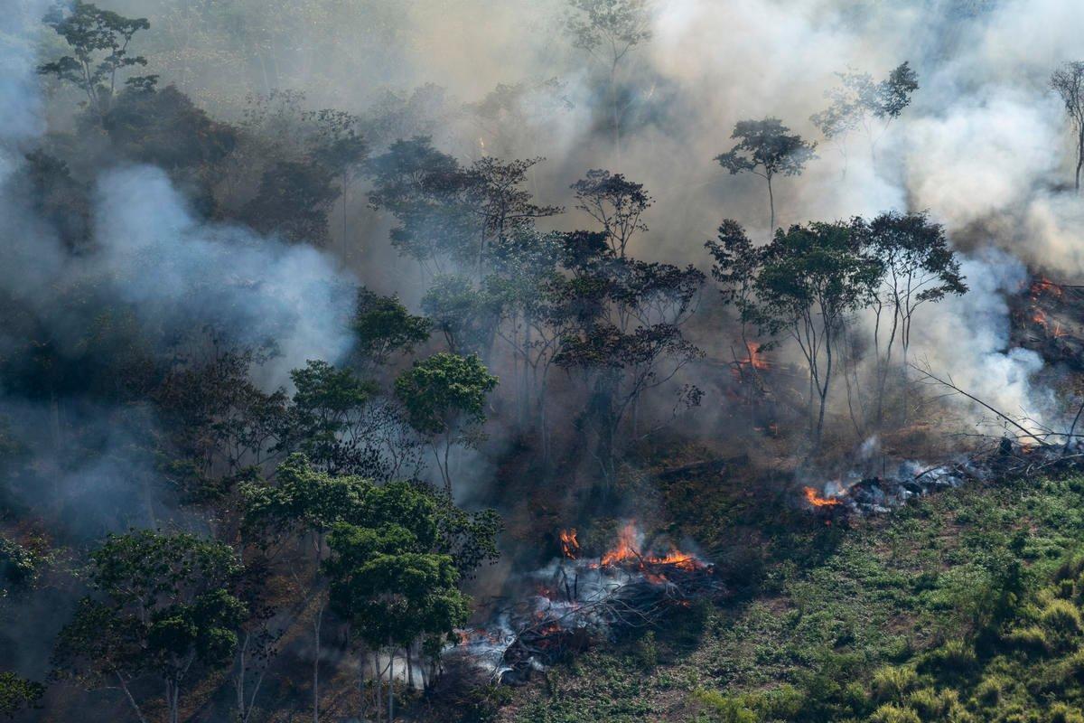 Queimada é uma das etapas do desmatamento