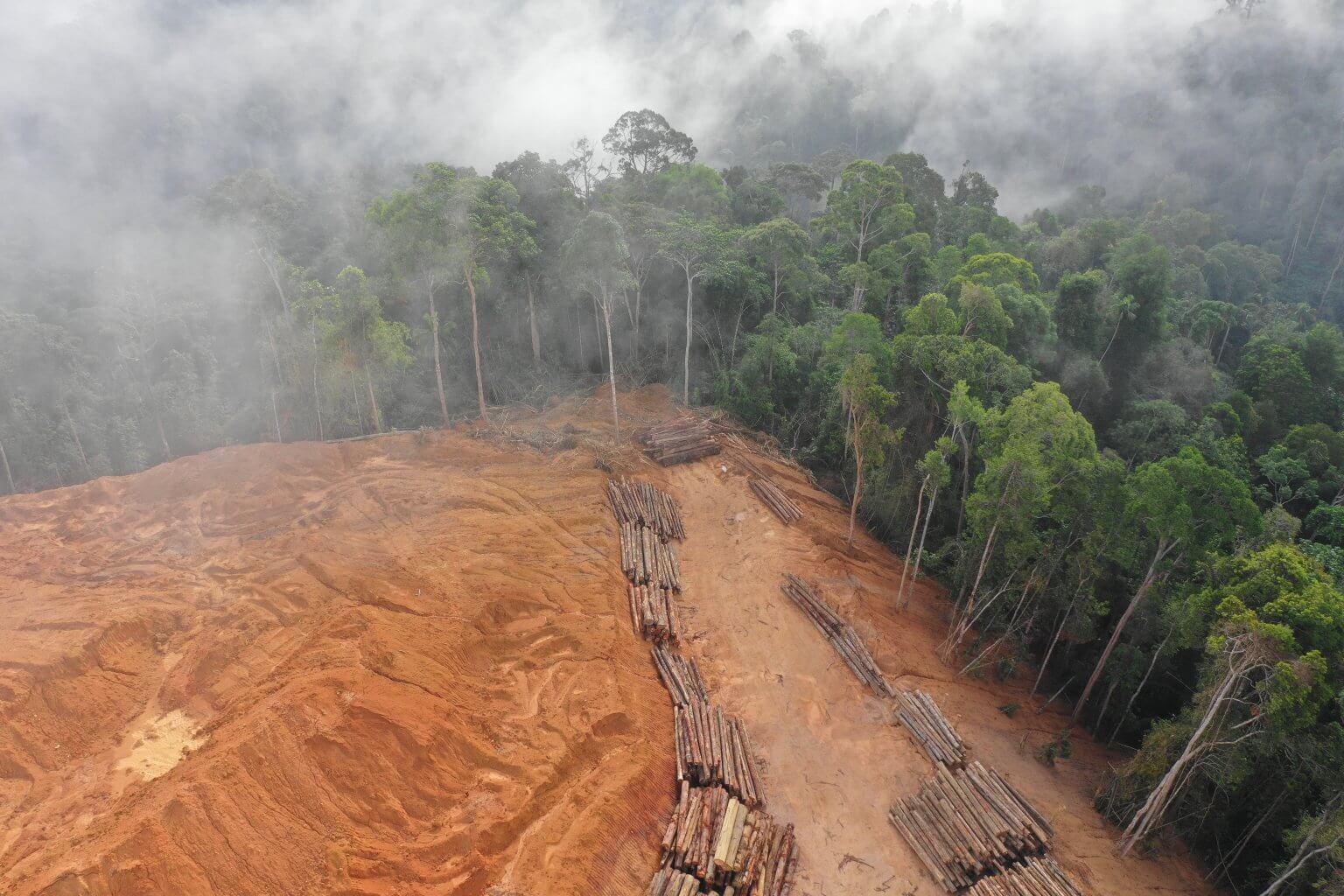 Desmatamento na Amazônia disparou em Brasil