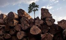 Projeto pode contribuir para o aumento do desmatamento (Marizilda Cruppe/Greenpeace)