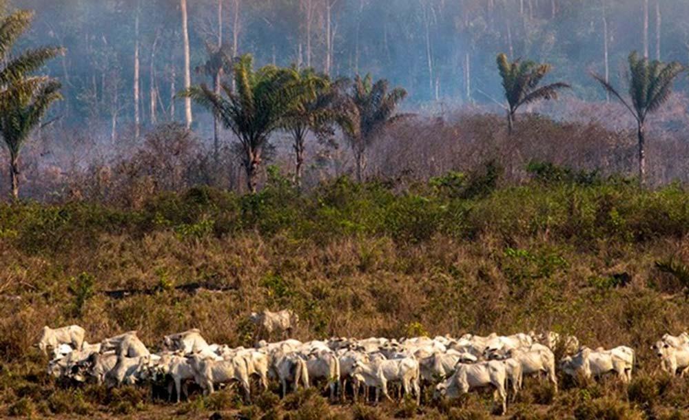 A pecuária extensiva é uma das grandes responsáveis pela destruição de florestas tropicais