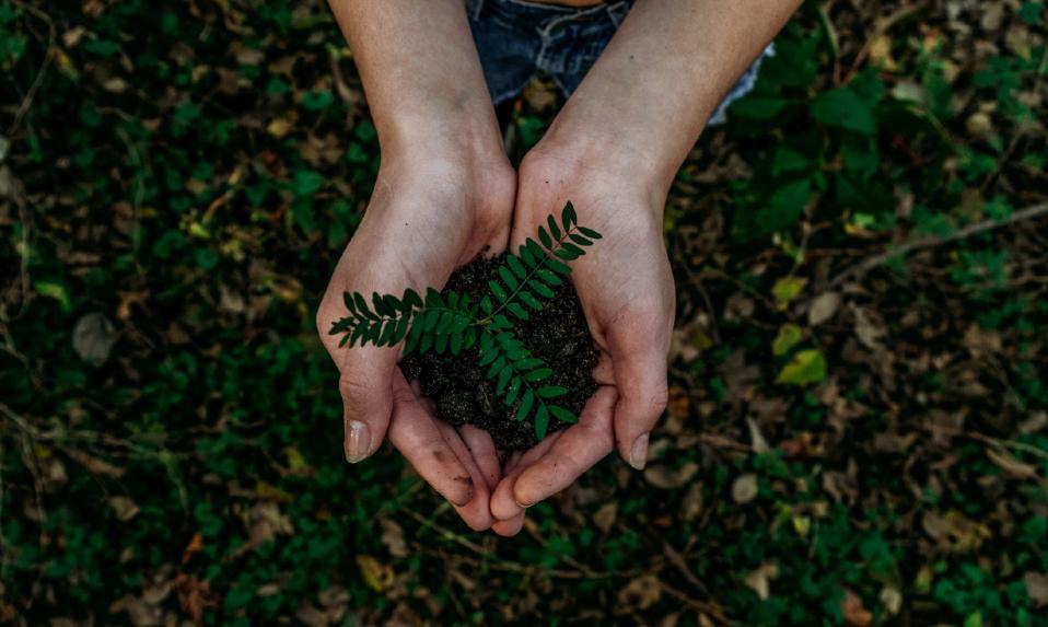 'Das mãos de Deus recebemos um jardim; aos nossos filhos não podemos deixar um deserto' (papa Francisco). Planeta saudável, pessoas saudáveis!