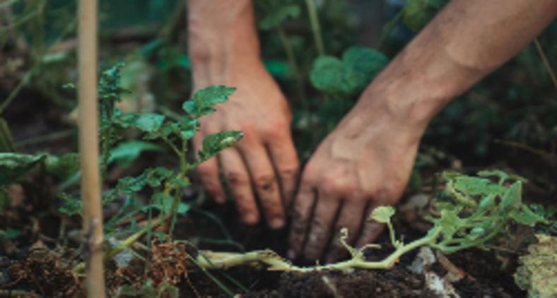 O que faz um jardim permanecer bonito, bem nutrido e florescendo é o tempo que se gasta cuidando dele (Unsplash/Jonathan Kemper)