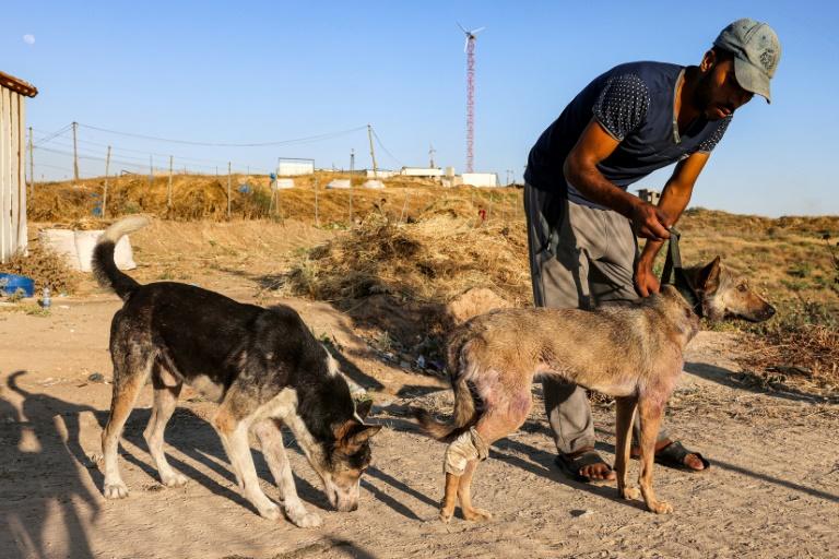 Funcionário de abrigo de cães na Faixa de Gaza em 24 de maio de 2021