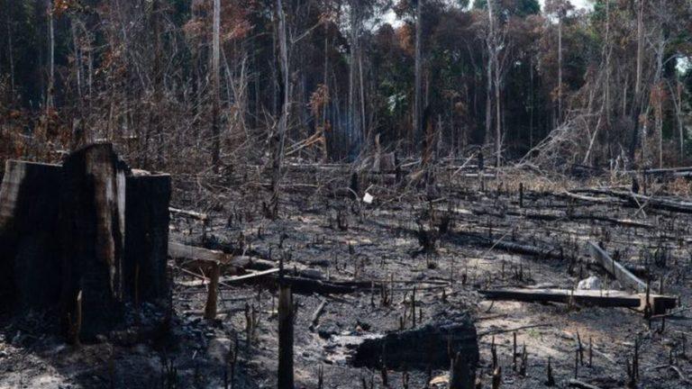 É o terceiro mês seguido de recorde de destruição da floresta em 2021