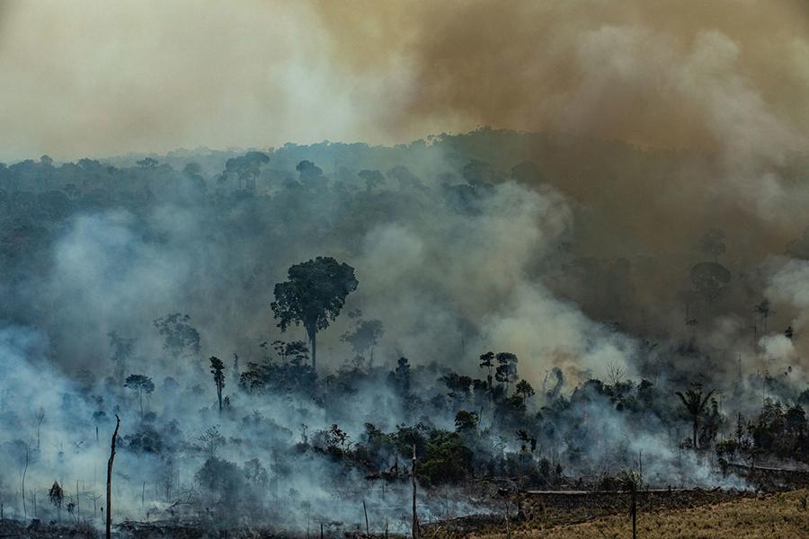 Pesquisadores do Inpe mostram que vegetações de pequeno e médio portes sofrem mais nos primeiros anos após o fogo