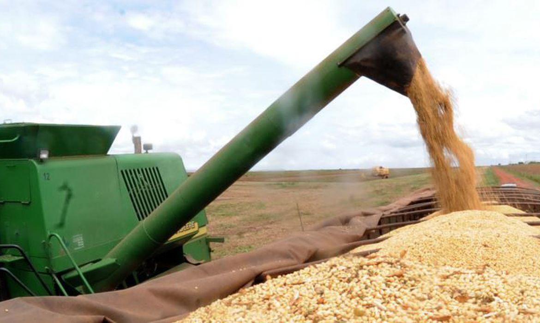 A soja deve ter uma safra recorde este ano, com 132,9 milhões de toneladas