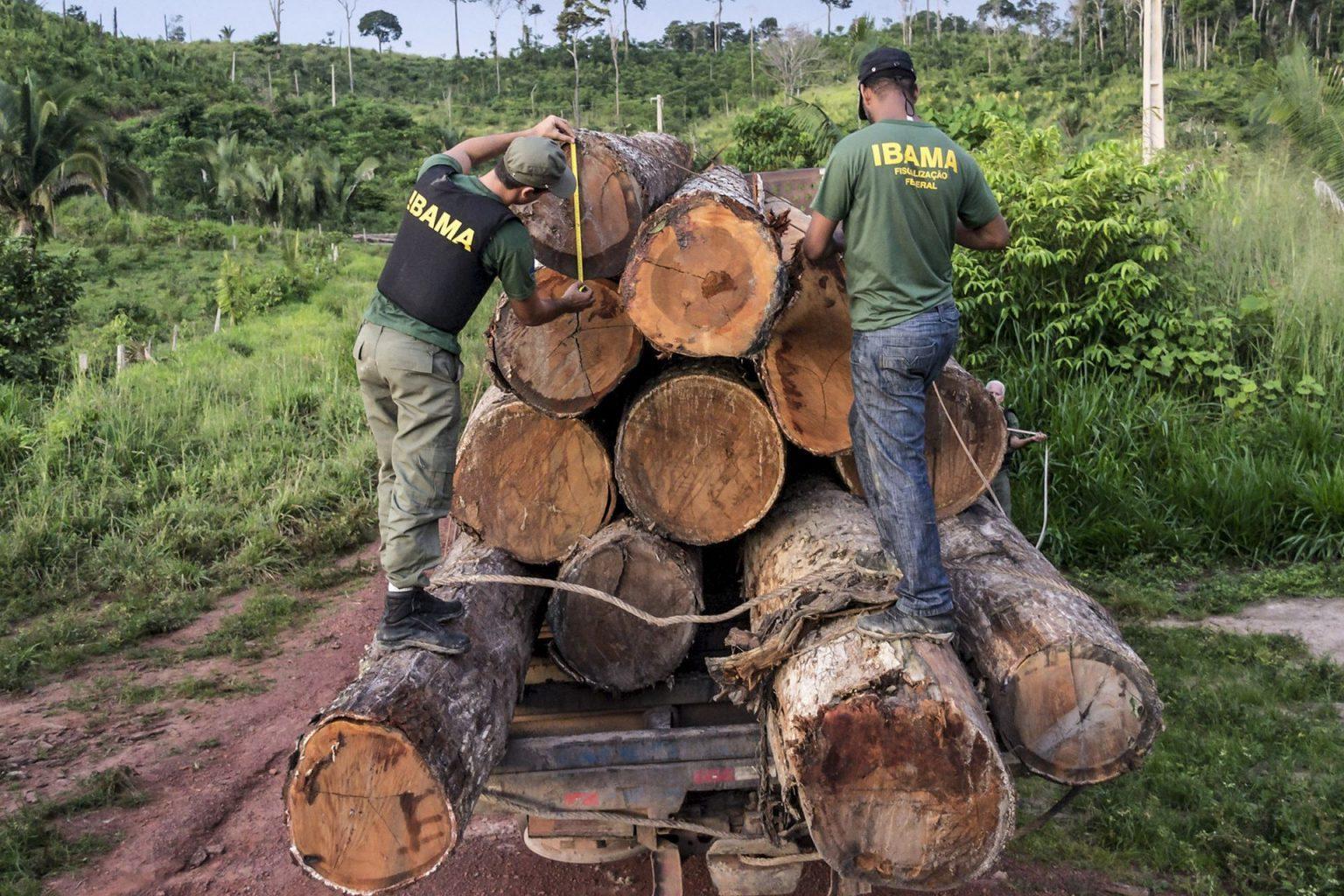 Processamento de multas ambientais segue asfixiado