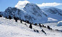 Pinguins na Antártica, em novembro de 2019 (Johan ORDONEZ/AFP)