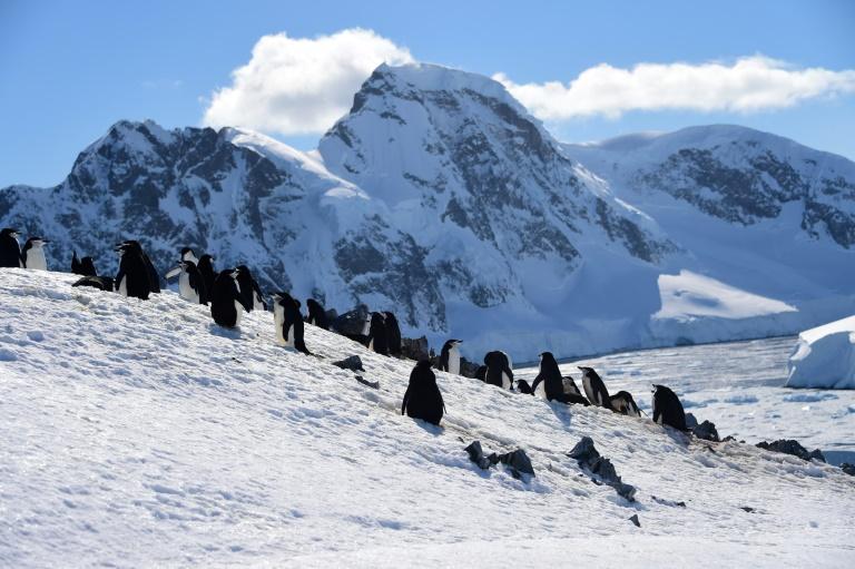 Pinguins na Antártica, em novembro de 2019