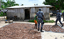 Operação de combate ao trabalho infantil em plantações de cacau na Costa do Marfim (Sia Kambou/ AFP)