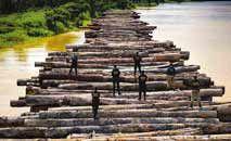 Operação das Forças Armadas apreende madeira ilegal no Pará (PF/Divulgação)