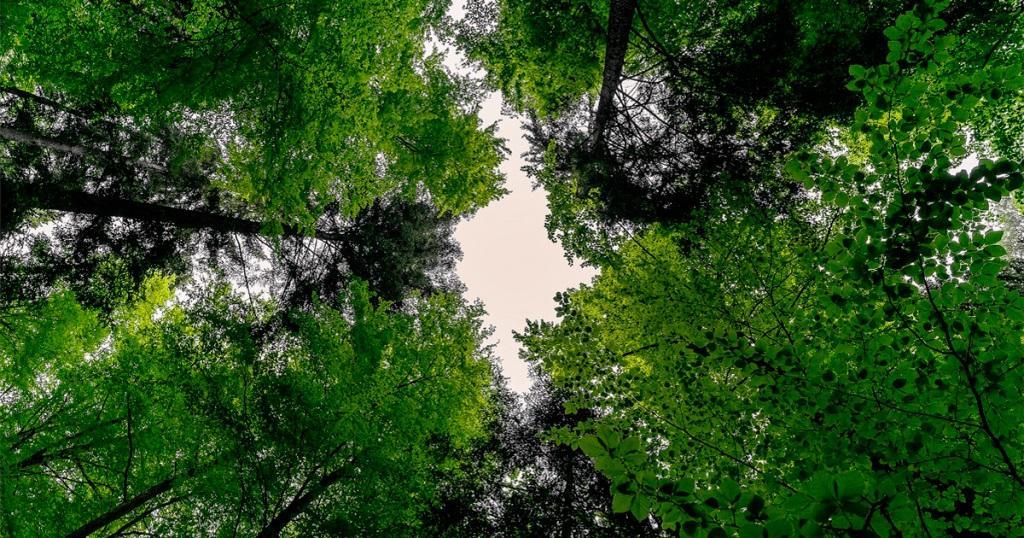 Essa mesma alteração nas clareiras pode acontecer nas florestas não modificadas pelo homem