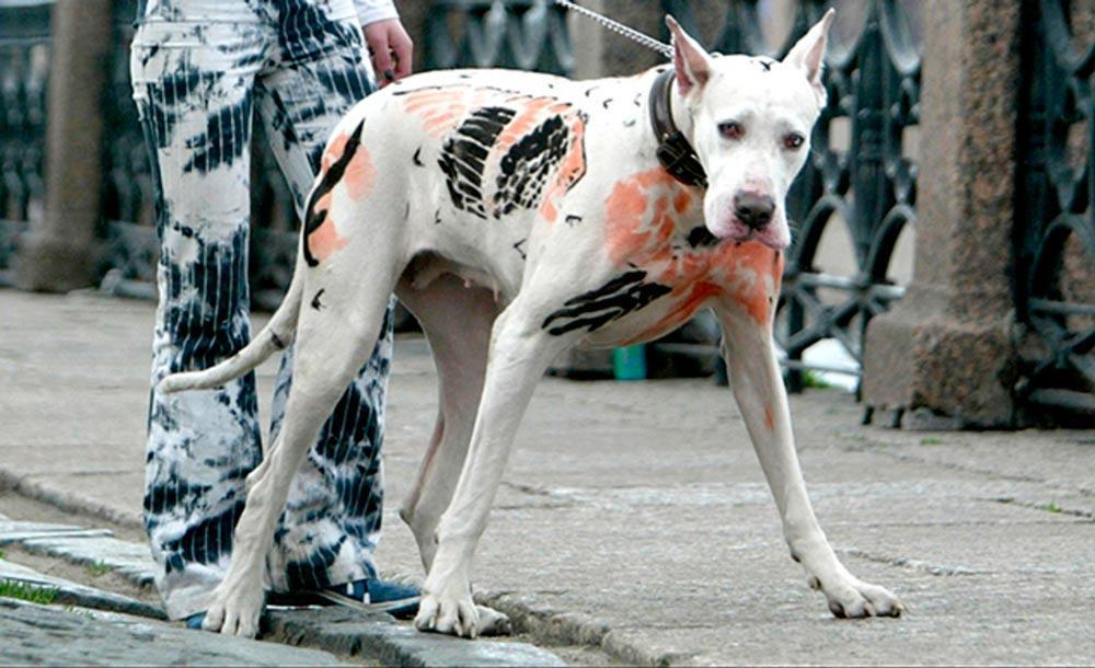Lei fluminense foi a primeira a detalhar e especificar a proibição de intervenções estéticas em animais