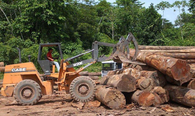 Desmatamento disparou na gestão Bolsonaro