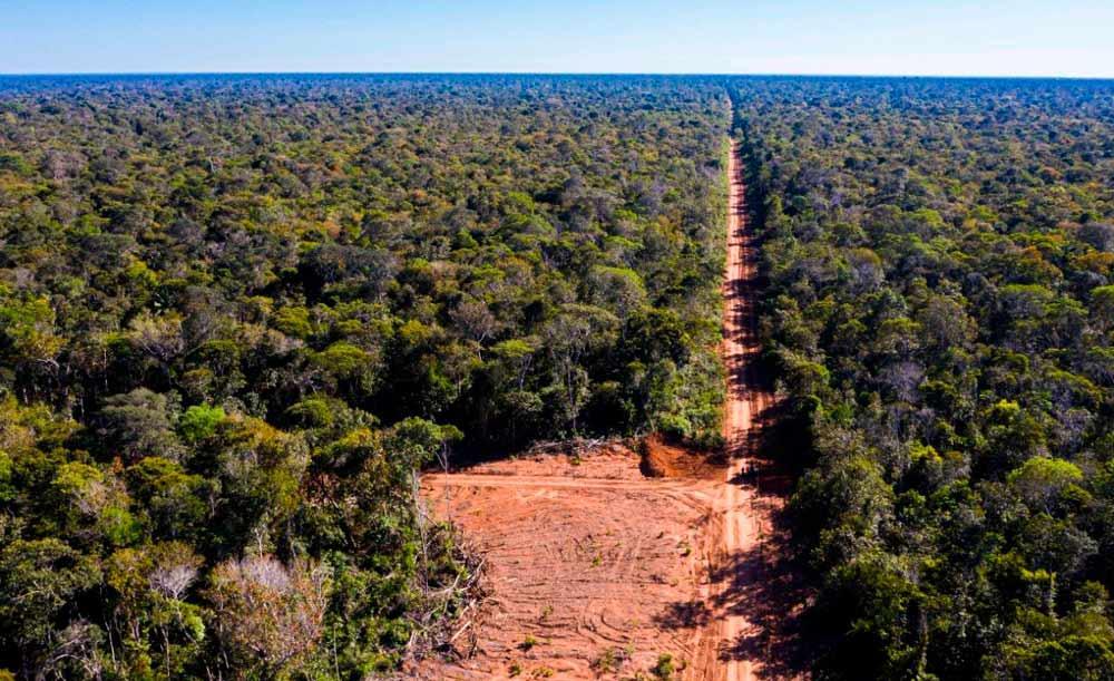 Os embargos e a fiscalização são determinantes para reduzir o desmatamento da Amazônia