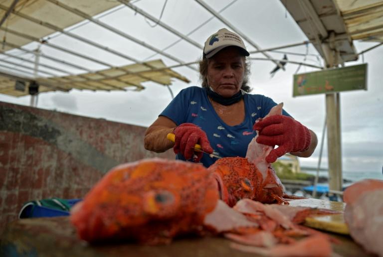 María Sabando em sua barraca no mercado no porto de pescadores da ilha de Santa Cruz, em Galápagos