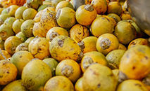 Tucumã também pode ser usado no lugar da gordura vegetal hidrogenada (Semcom)