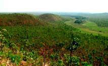 O Cerrado é um dos biomas mais ameaçados por queimadas e pela expansão da soja (Embrapa/Divulgação)