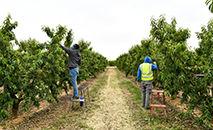 Plantação de nectarinas em (Arquivo) Alcarras, na Espanha, em 22 de maio de 2021 (Pau BARRENA/AFP)