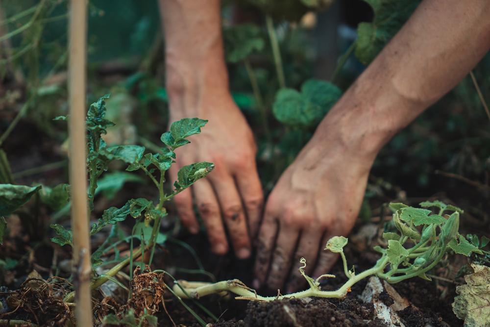 O que faz um jardim permanecer bonito, bem nutrido e florescendo é o tempo que se gasta cuidando dele