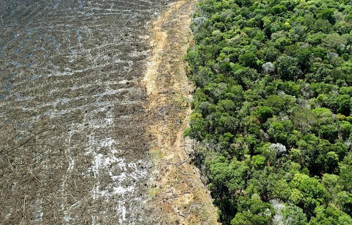 A fauna mundial sofre grandes perdas em razão do desmatamento e das mudanças climáticas