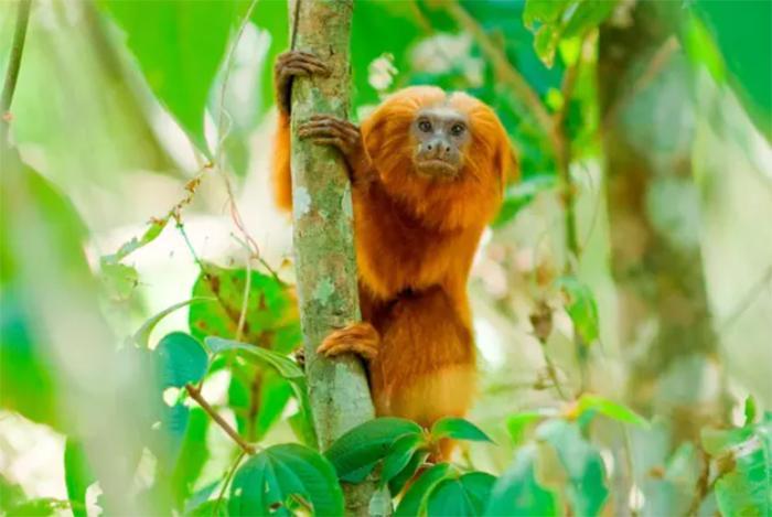 94% da população de 77 espécies de mamíferos e pássaros desapareceram apenas no século 20