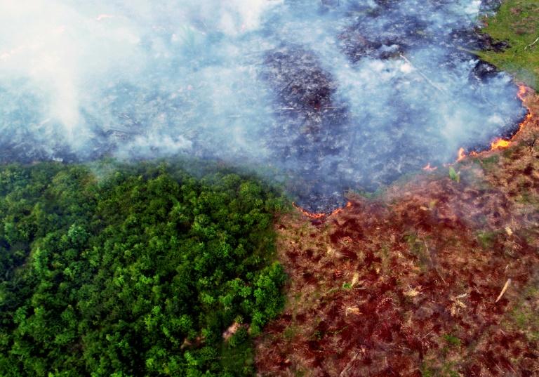 A bacia amazônica contém cerca de metade das florestas tropicais do mundo, que são mais eficazes em absorver e armazenar carbono que outros tipos de vegetação