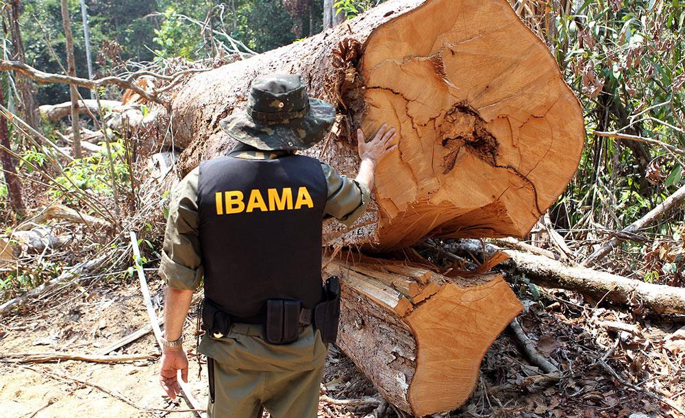Pesquisa mostra importância de fortalecer economias que se baseiam na floresta em pé