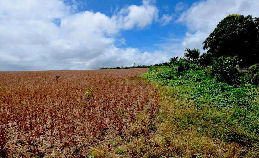Avanço da soja é uma dos principais causas do desmatamento no bioma amazônico