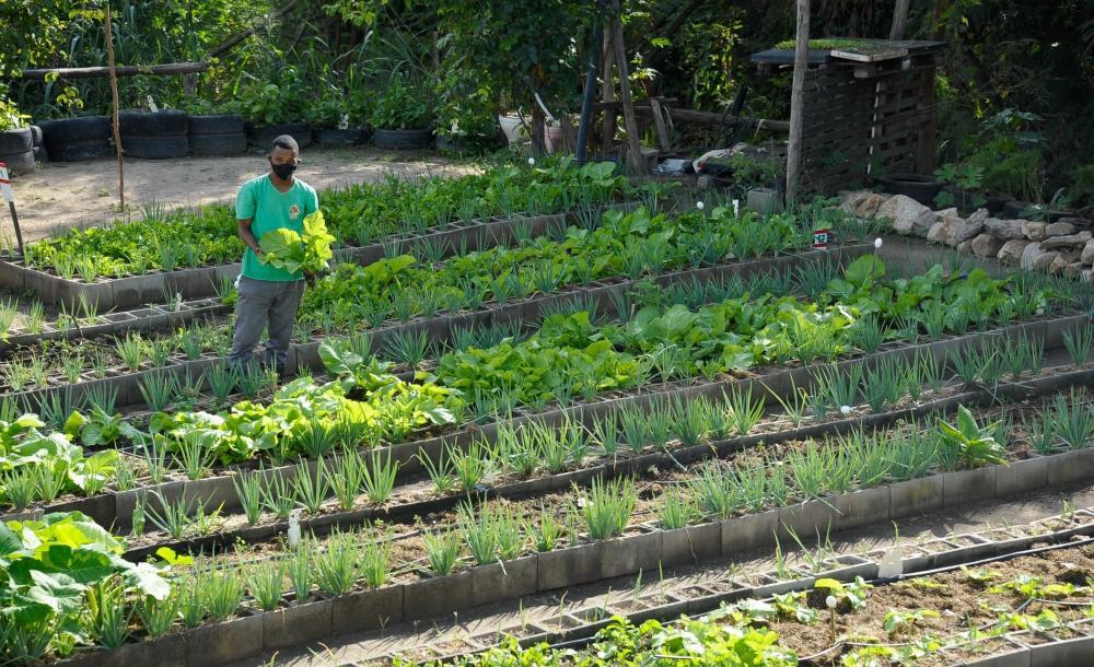 A maior horta urbana da América Latina fica em Manguinhos. O projeto comunitário transformou a paisagem da favela e a vida de quem nele trabalha ou recebe os alimentos ali colhidos