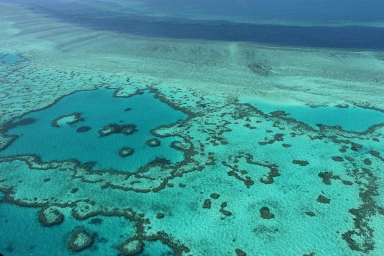 Cientistas australianos consideram 'muito ruins' as perspectivas para o futuro da Grande Barreira de Corais