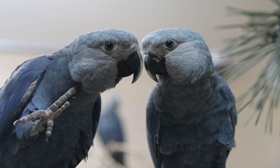 Eles são fruto de um casal que veio entre 52 exemplares repatriados da Alemanha